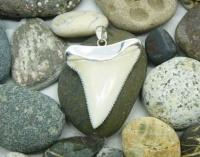 Кулон-амулет Зуб белой акулы длиной 5 см ГИГАНТСКИЙ РЕДКИЙ в серебре