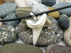Кулон с зубом акулы Мако