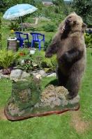 Чучело бурого медведя