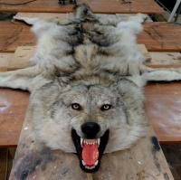 Ковер из шкуры волка с головой волка