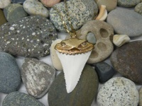 Кулон, амулет зуб белой акулы (копия коллекционного)